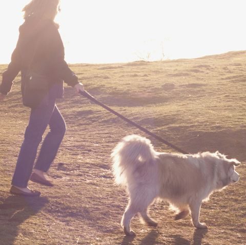 New research shows half of dog owners try to avoid dog walks in the rain