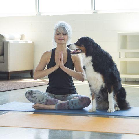 dog watching woman doing yoga