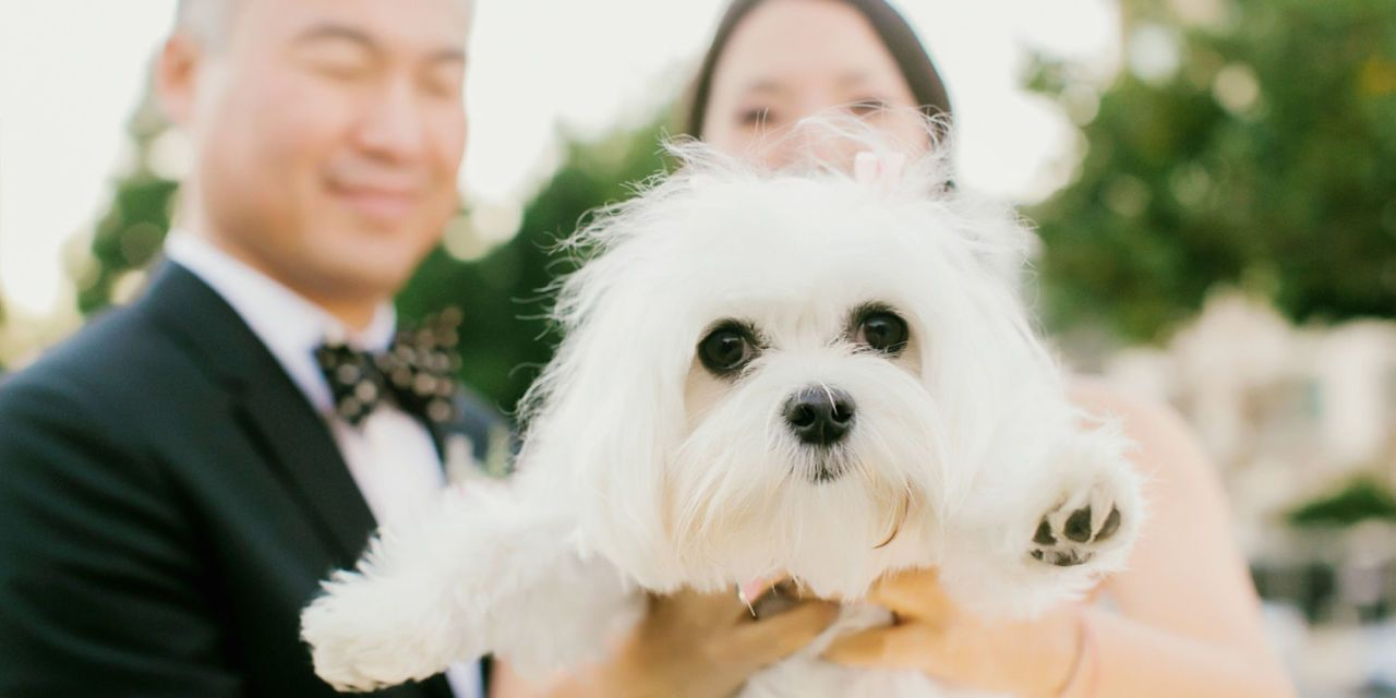 30 Best Dog Wedding Ideas to Make Your Pup the Star of Your Nuptials