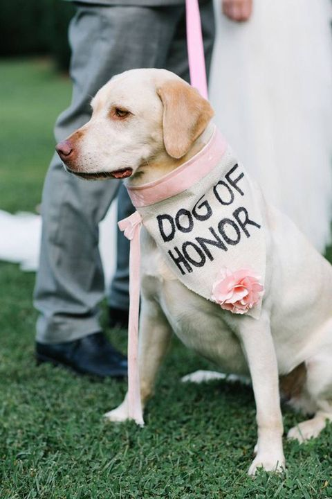 dog wedding ideas dog of honor