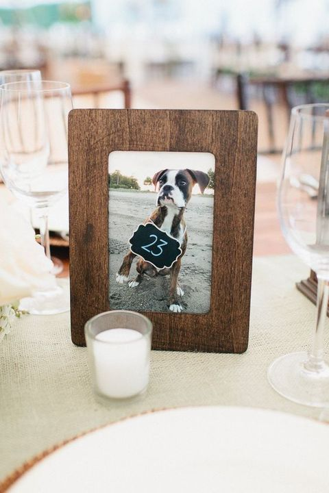 dog wedding ideas table number