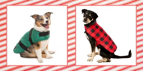 3e3faf465c87 20+ Best Dog Coats for Winter - Pet Jackets That Keep Pups Warm