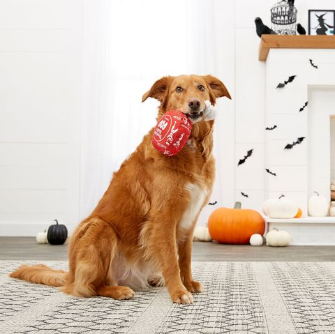 Dog With Candy Toy