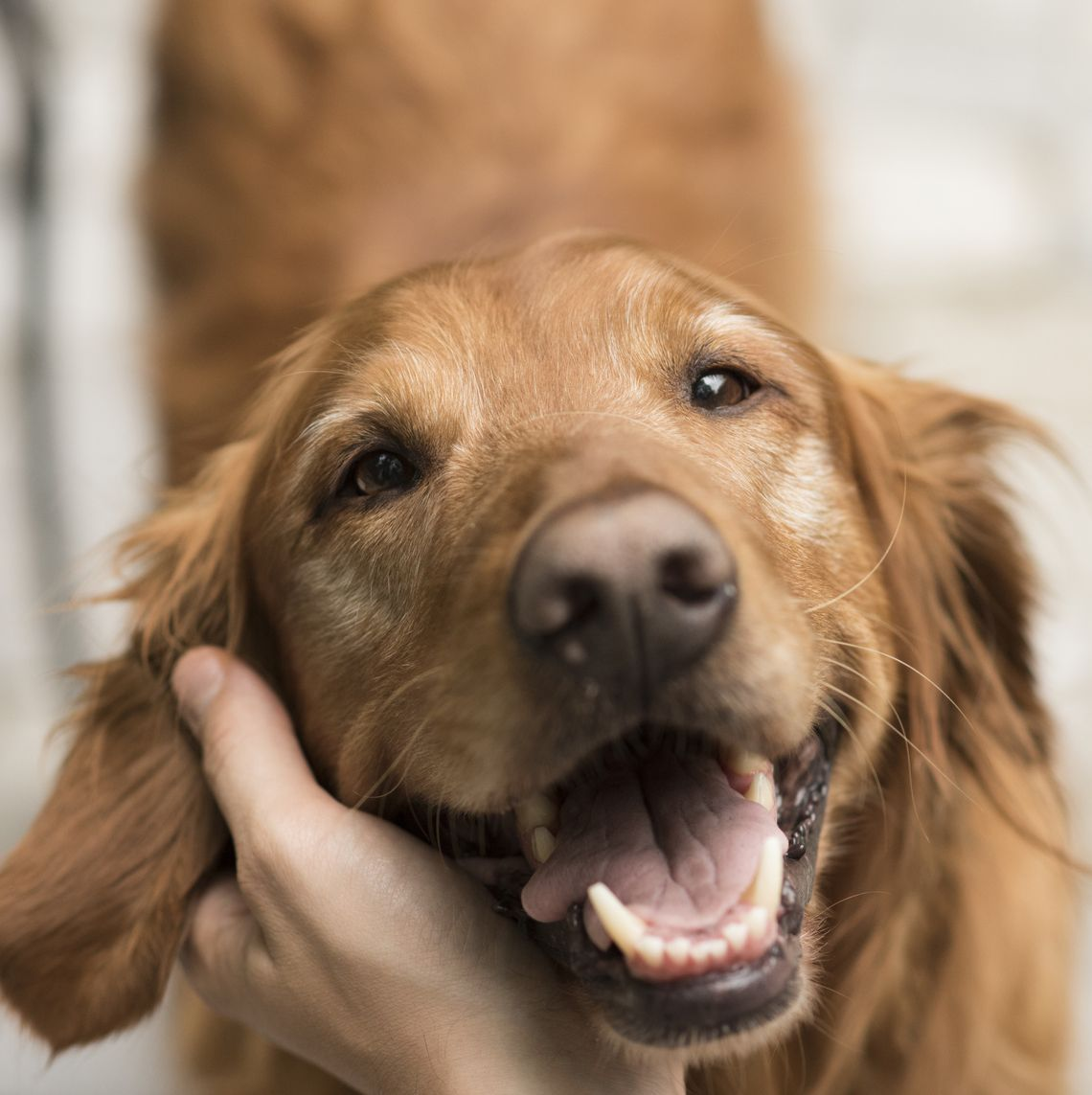 11 tell-tale signs your dog is suffering from pain and mobility issues