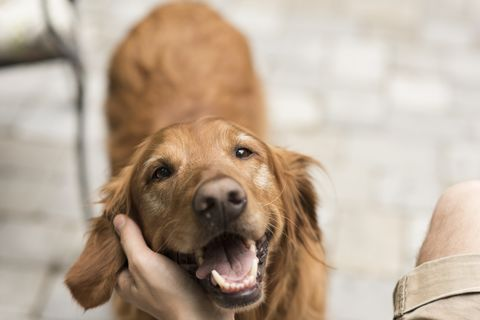 Dogs adopt their owner's stress and feel it themselves, new study finds