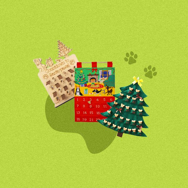 dog advent calendars