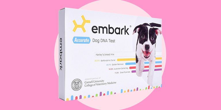This Doggy DNA Kit Is the Cheapest It's Ever Been—But Only for a Few Hours