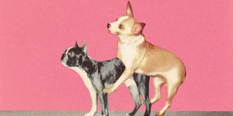 Perform style doggy to how 12 Doggy