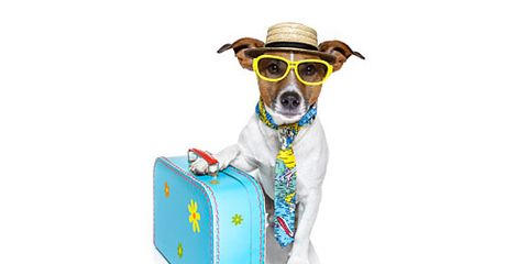 Doggy Going on Vacation