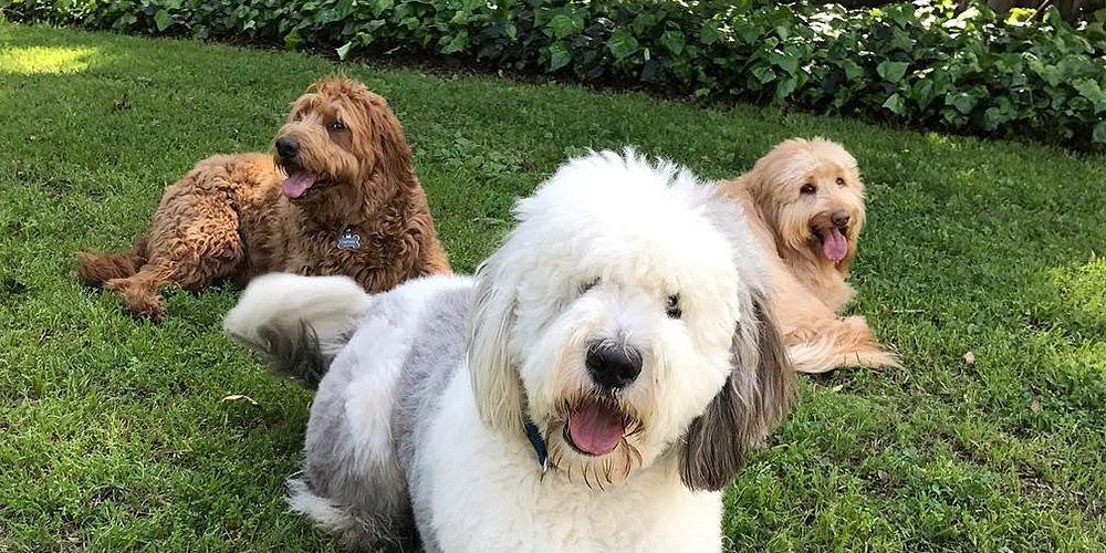 How Regramming a Cute Dog Lead to an Instagram Scandal - ke