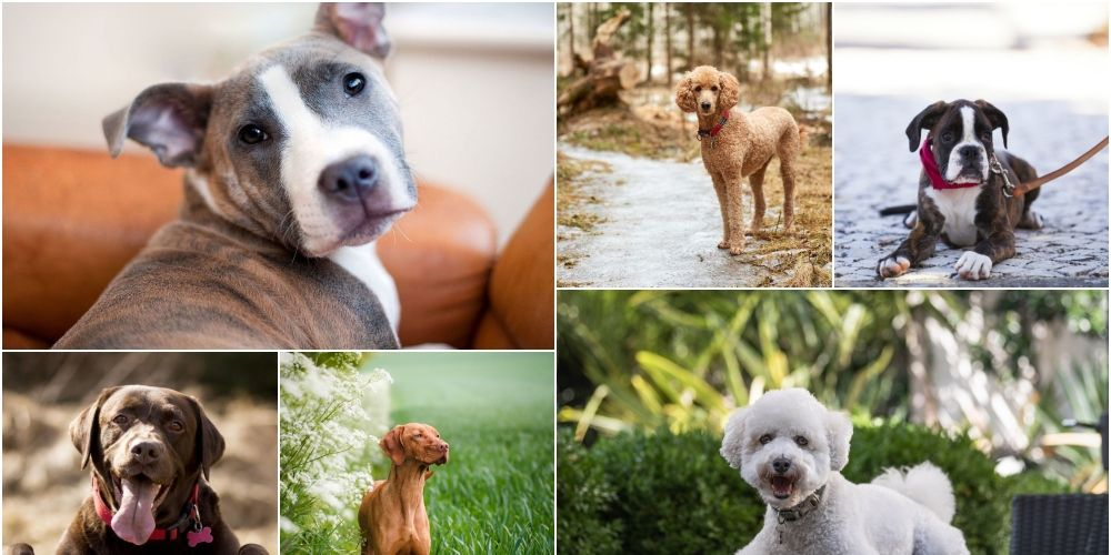 Best dog breeds for families with children photo