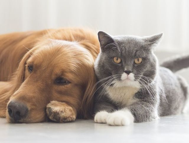 What Is Toxic To Dogs And Cats The 10 Most Common Causes Of Pet Poisonings