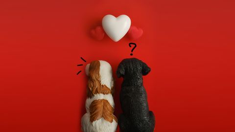 dogs by heart shapes on red background