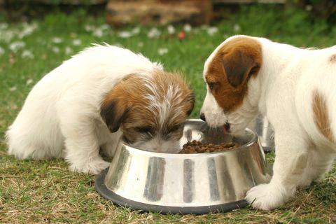 Dogs' dinner