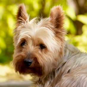 Dog breeds for small flats