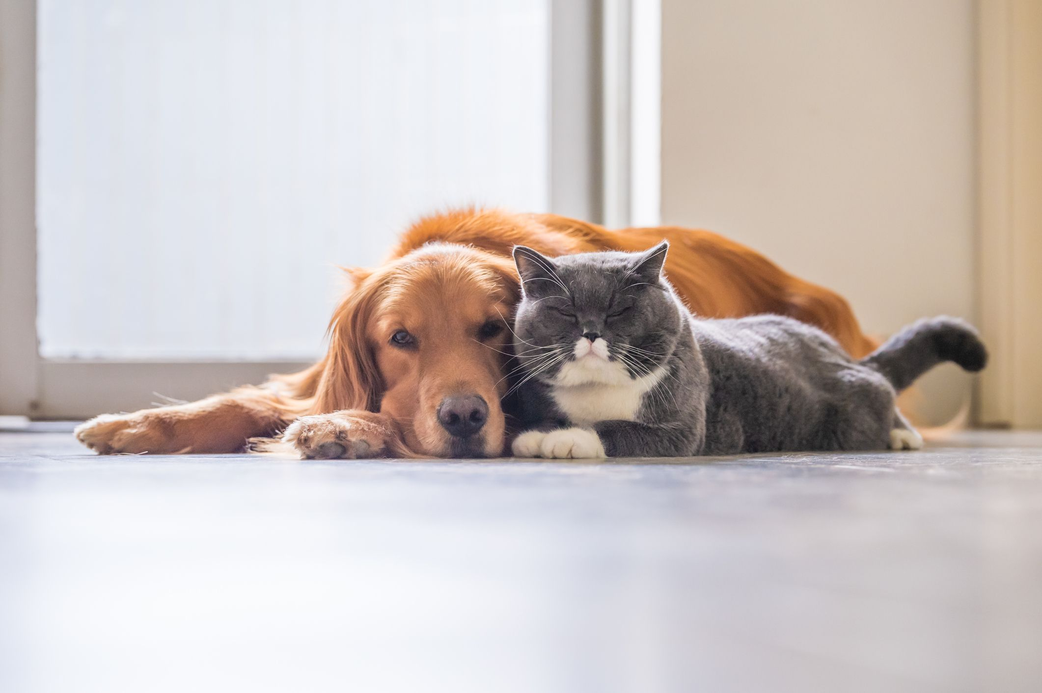 13 Dogs That Are Good With Cats