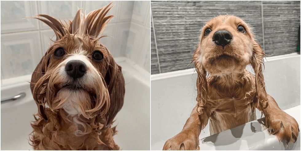 12 adorable images of dogs getting baths to brighten your day