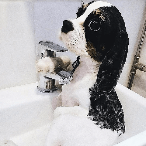 dogs in baths   fun images