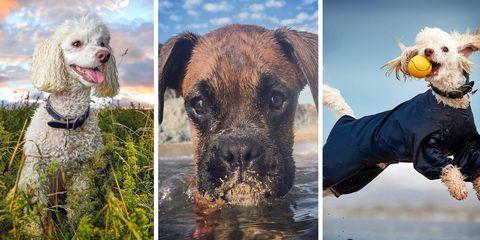 best dogs instagram photos