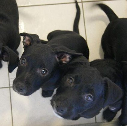 The Dogs Trust puppies
