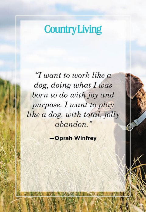 oprah winfrey quote about dogs