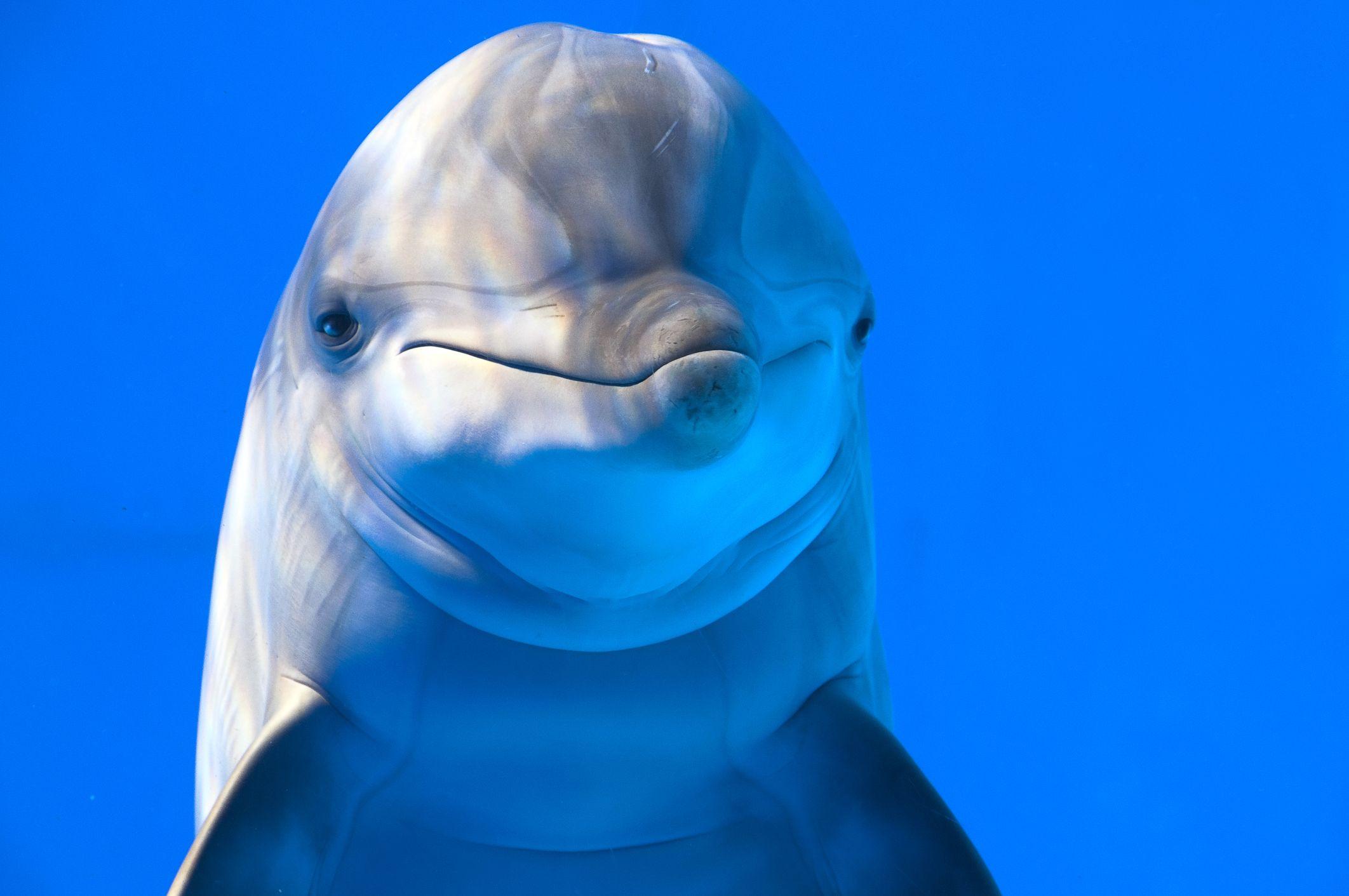 Dolphin in aquarium of Barcelona