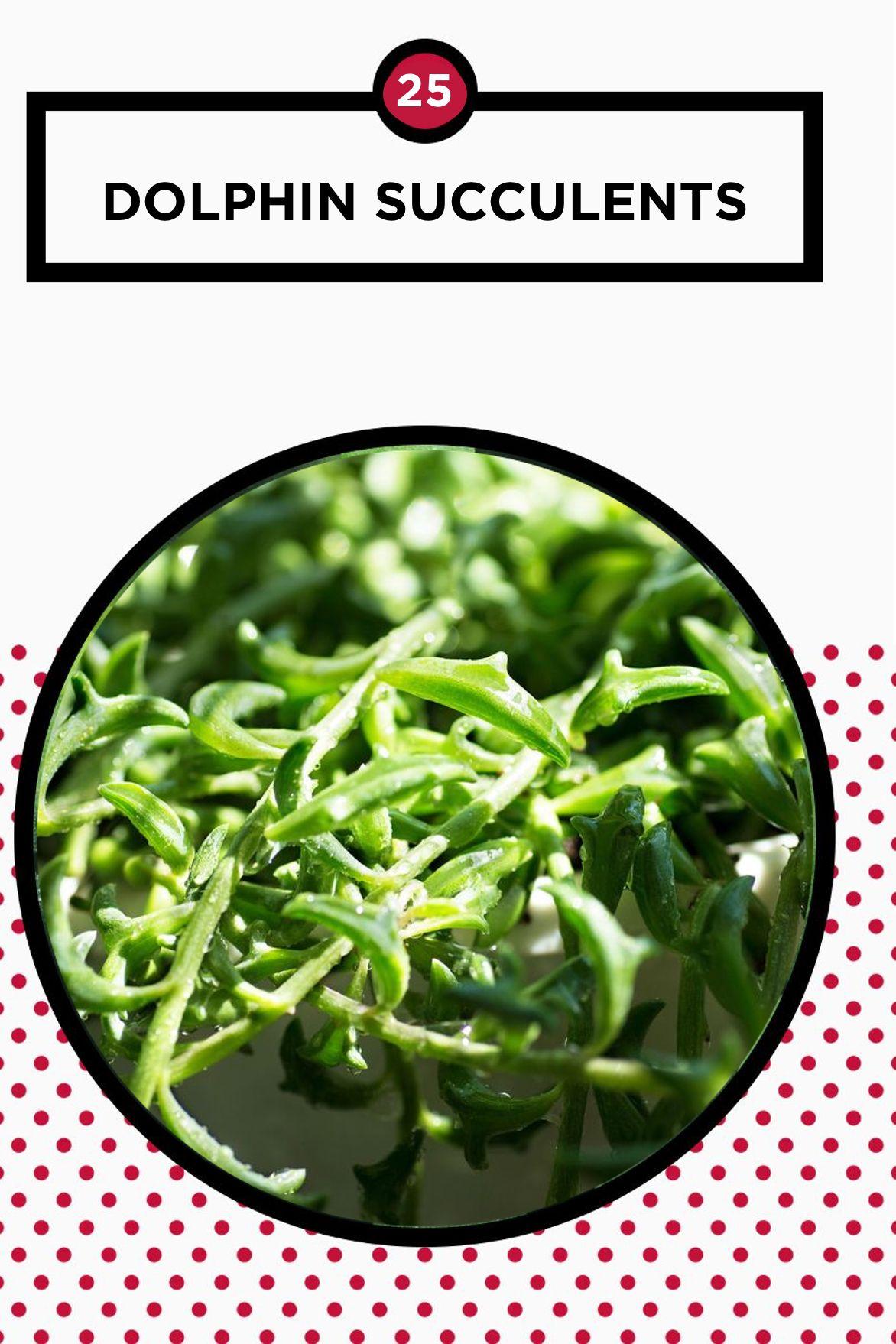 25 Best Succulent Plant Types Different Kinds Of Succulents List