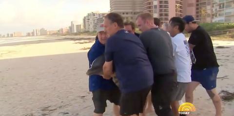 dolphin rescue hurricane irma