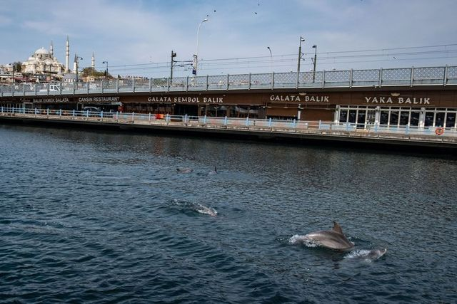 dolphins swimming close to shore in the bosphorus strait