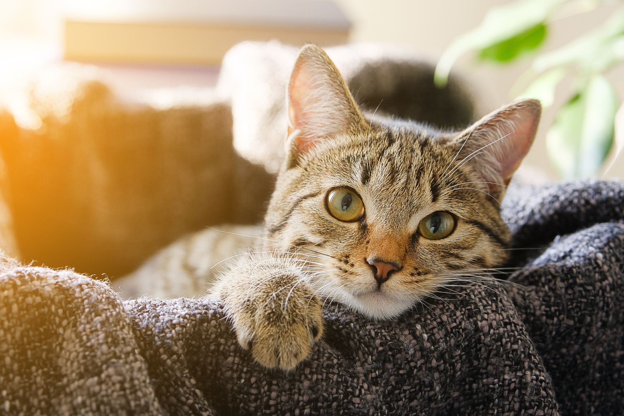 9 Signs Your Cat Loves You How To Tell If Your Cat Loves You