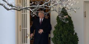 Donald Trump news: a Natale si regala l'orsetto di peluche identico al presidente