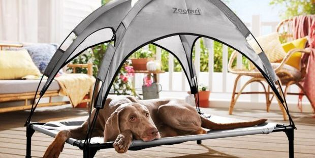 Lidl Is Selling A Dog Bed With A Sun Shade Ready For The Heatwave