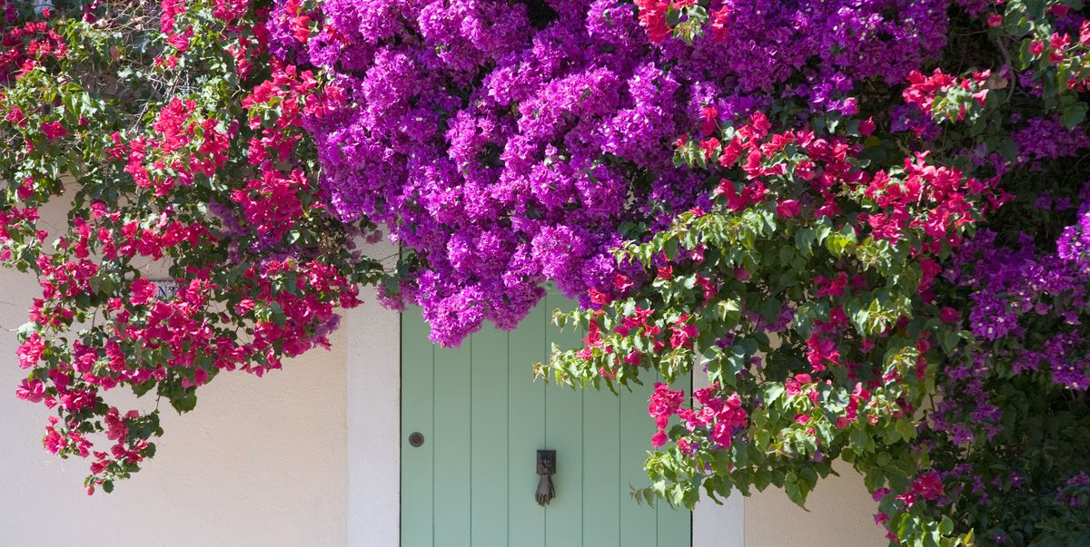 12 Fast-Growing Flowering Vines for Your Garden