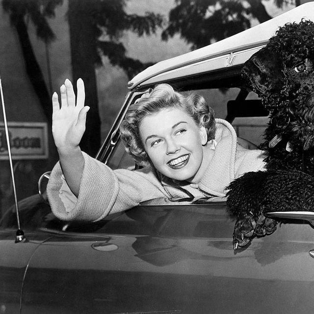 Doris Day*03.04.1924-Actress, USAwith a poodle in her car.- about 1955