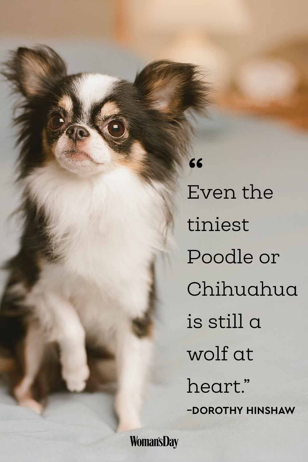 funny dog quotes cute dog sayings that describe your pup