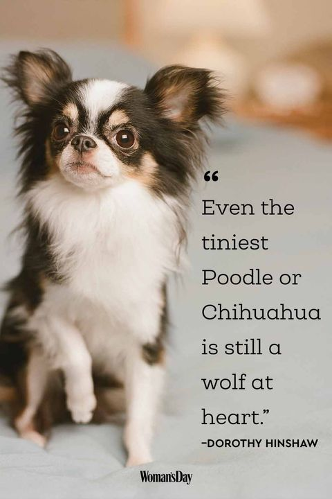 Dog Quotes - Dorothy Hinshaw