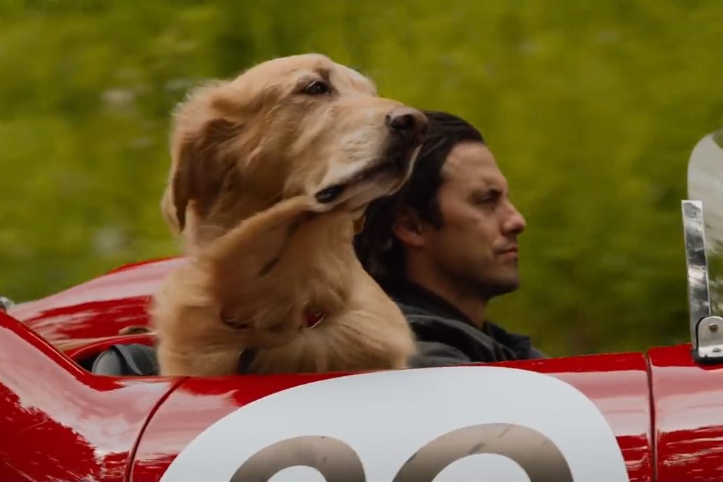 The Art of Racing In the Rain Will Hit Theaters in August