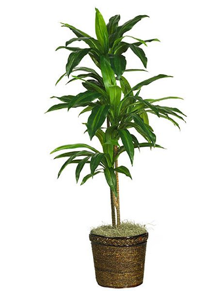 Flowerpot, Flower, Plant, Houseplant, Terrestrial plant, Tree, Flowering plant, Palm tree, Arecales, Plant stem,