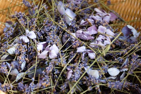 Dried flower. Lavender and