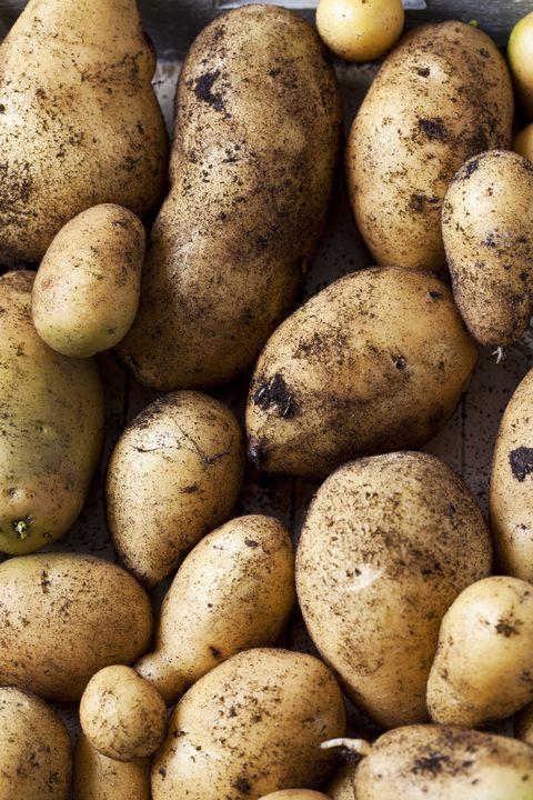 Drilling potatoes