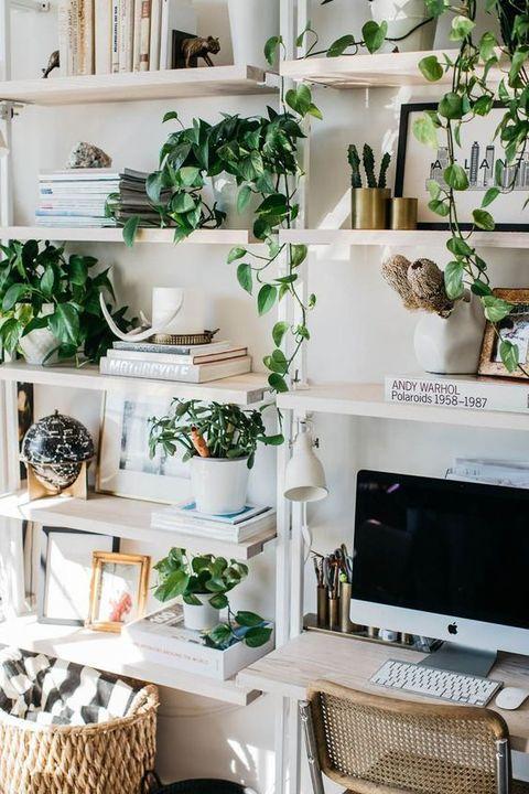 El Poto Una Planta De Interior Facil Y De Moda - Plantas-colgantes-de-interior