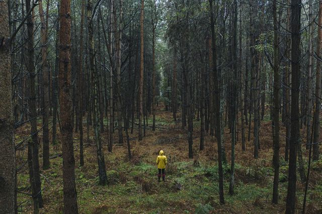 drone footage of woman in yellow raincoat in wet forest