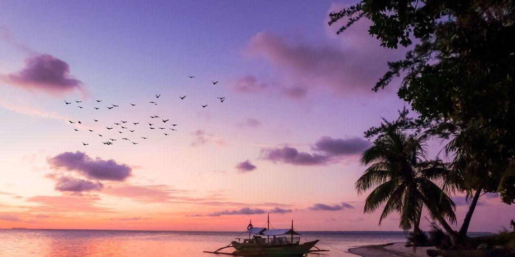 droombaan-oppassen-zeehondjes-onbewoond-eiland