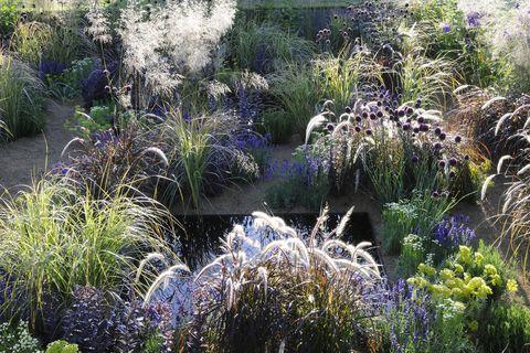 a garden design by rising start alexandra noble