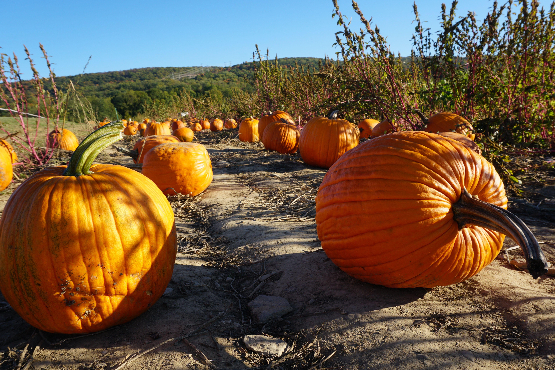 Pumpkin Patch Near Me - 50 Best Pumpkin Farms in America