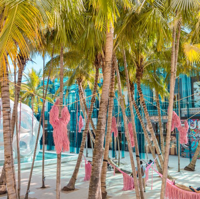 Tree, Vacation, Palm tree, Plant, Fun, Arecales, Beach, Leisure, Tourism,