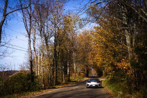 Tree, Motor vehicle, Natural landscape, Road, Leaf, Sky, Autumn, Natural environment, Woody plant, Yellow,