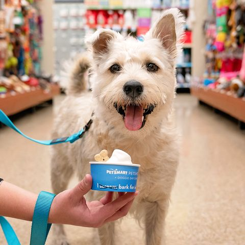 Petsmart Christmas Eve Hours.Petsmart Is Celebrating National Ice Cream Day With Freebies For