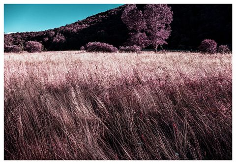 Sky, Purple, Violet, Grass, Lavender, Natural landscape, Field, Tree, Water, Grass family,