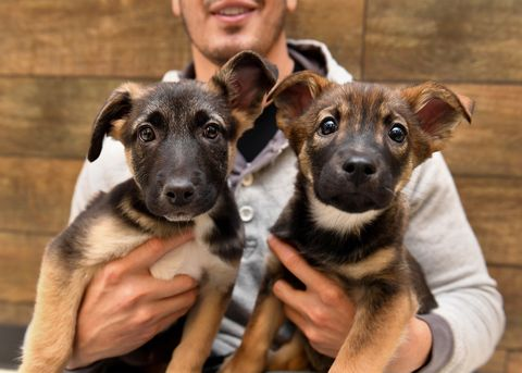 Dog, Vertebrate, Dog breed, Canidae, Mammal, Puppy, Carnivore, Snout, Street dog, Potcake dog,